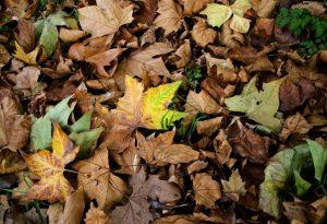 leaf debris